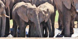 [Article] Les éléphants d'Éric Zemmour